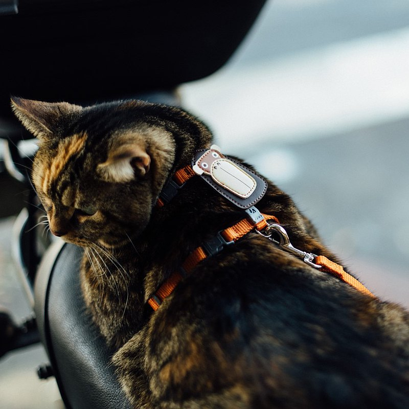 [Tail and Me] Classic Nylon Belt Cat Series Leash Warm Orange