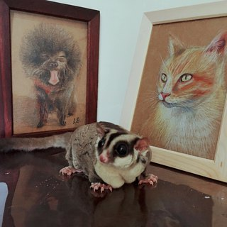 Pencil hand-drawn pet portrait (with box)