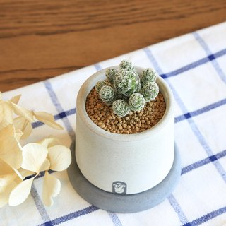 Small wells succulent plant cactus cement hand-made potted plants containing plants/silver fingers