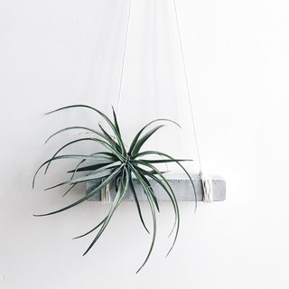 Air plant / tillandisia concrete hanger / concrete planter / concrete holder