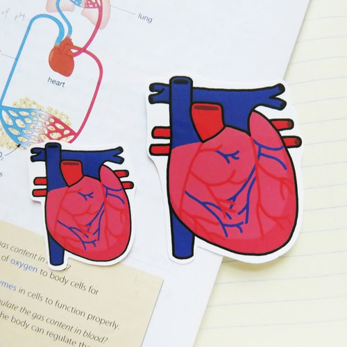 """Lifelong Learning Series"" - Anatomical heart sticker (Small)"