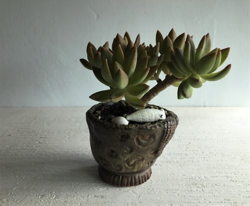 Amoeba sports hand pinch succulent potted pottery_ pottery potted potted plants