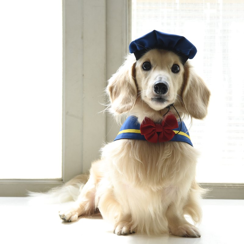Sugar duck old navy collar from Wang Hao's planet - 呱呱**with bow + hat**[ZAZAZOO]