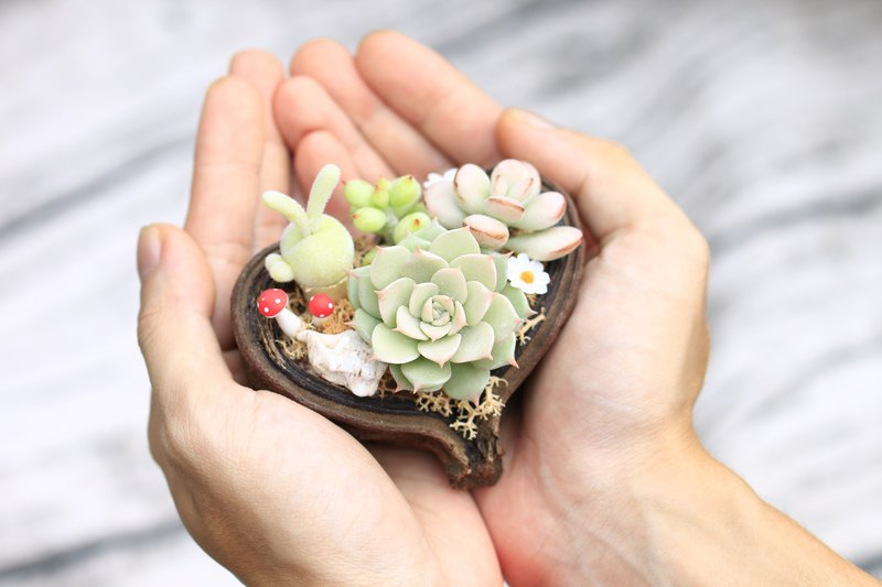 Simulation succulent combination + natural Pingbo seed shell