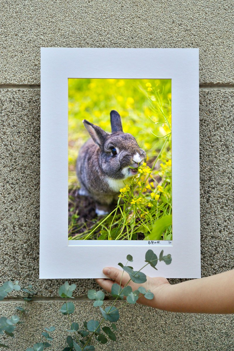 Limited rabbit photography art original - happy