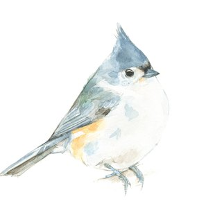 Watercolor decorative painting bird - 0008