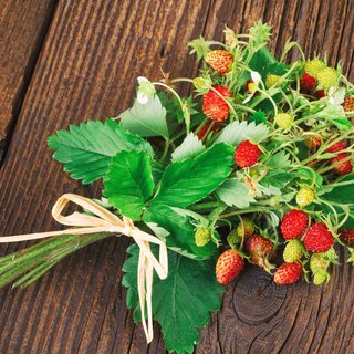 Candy strawberry/cultivation combination