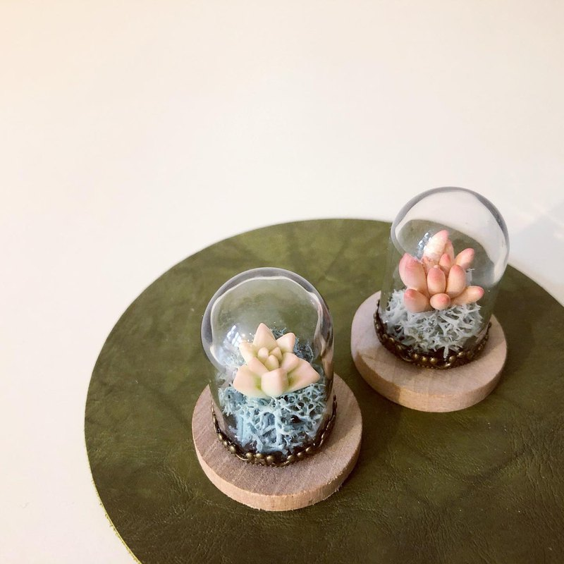 Small fleshy in the bottle. Simulation clay succulents _ 2 models in total
