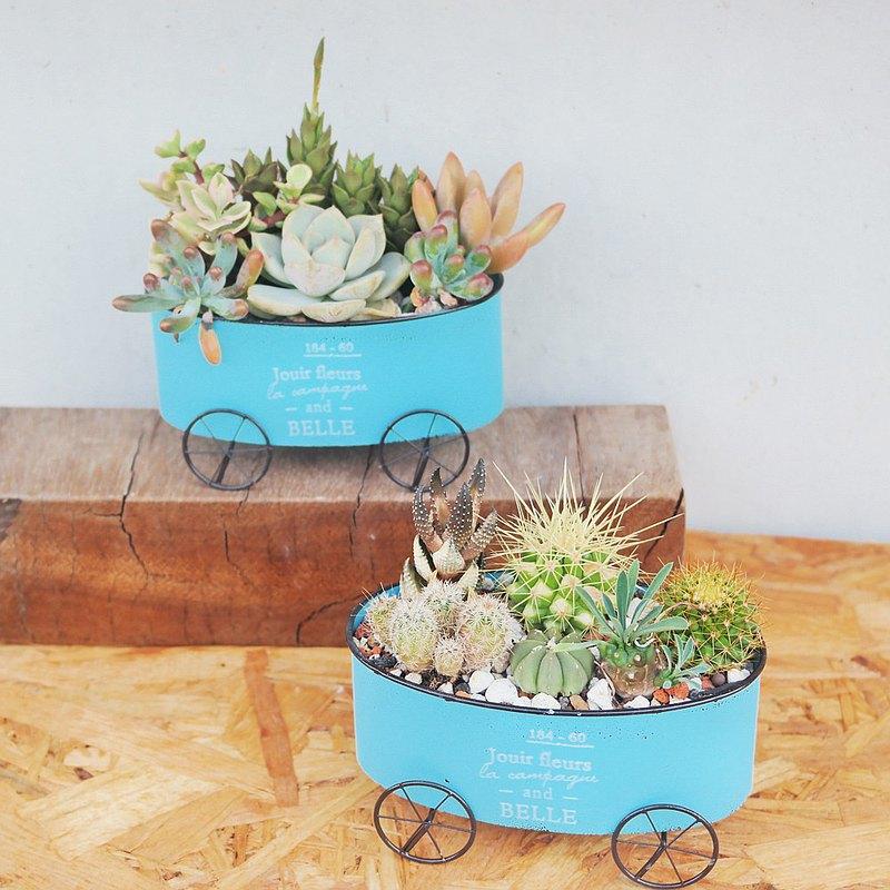 荳荳多肉植物與小雜貨-藍色鐵器四輪車多肉植栽組合