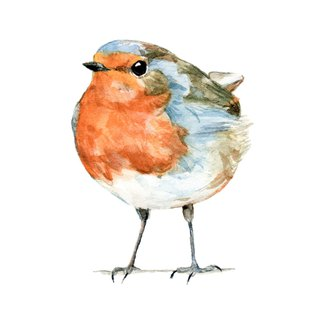 Watercolor decorative painting robin - 0006