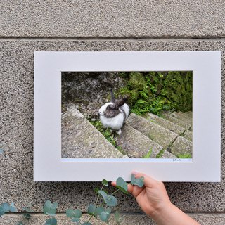 Limited Rabbit Photo Art Original - Level