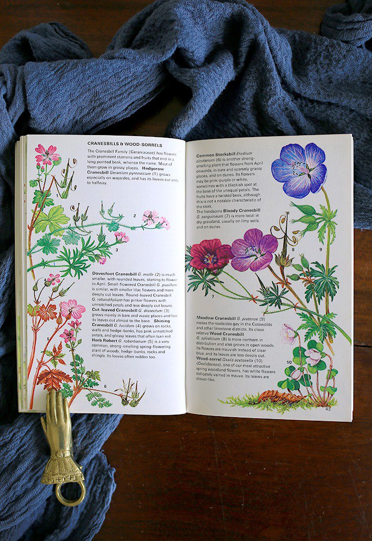 [Spot] // British Nordic Series WILD FLOWERS // Floral Vintage Old Book No.2