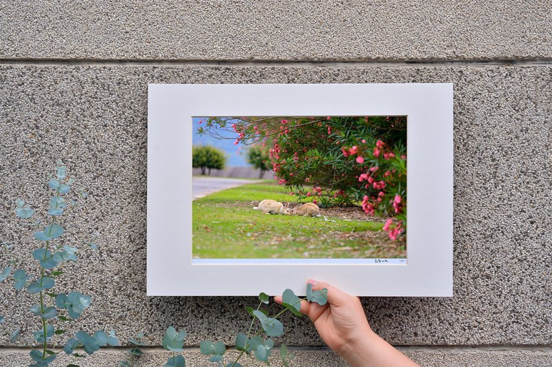 Limited rabbit photography art original - encounter