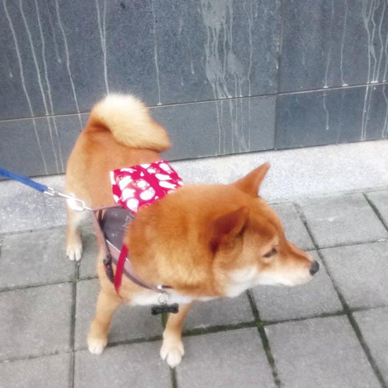 Lovely【柴柴發財寵物後背包】可調整肩背帶自背包、紅
