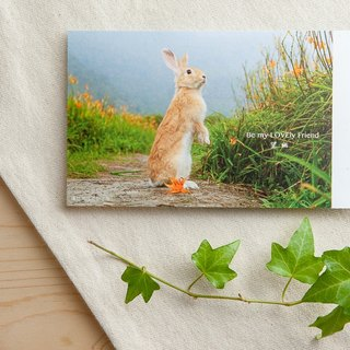 Rabbit photo illustration postcard - Wang You