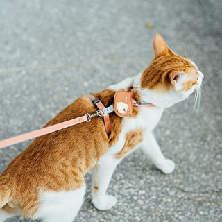 [Tail with me] classic nylon cat series chest strap pink orange sky blue