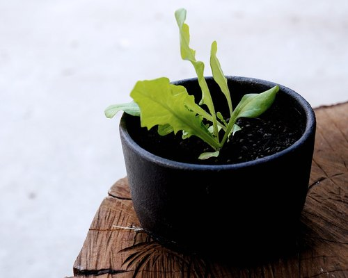 No.03 edible vegetables ceramic planting pot