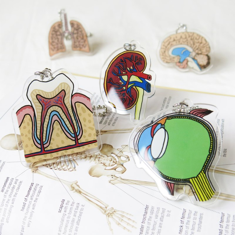 Visceral keyring key ring - kidney eye teeth