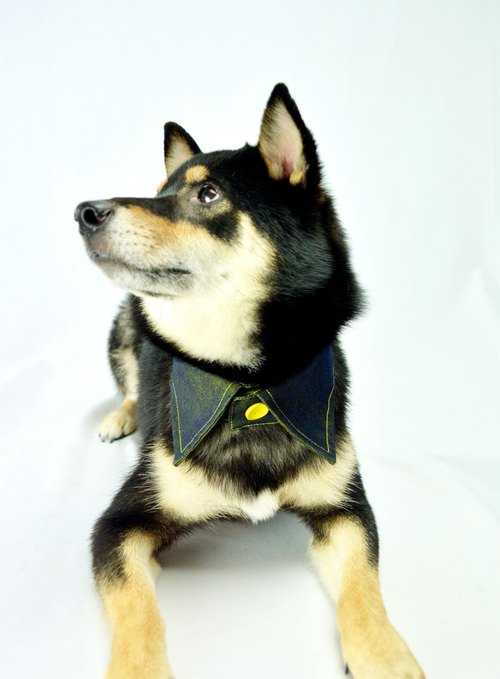 Pets sided shirt collar - yellow and blue YE (XL / 2XL / 3XL)