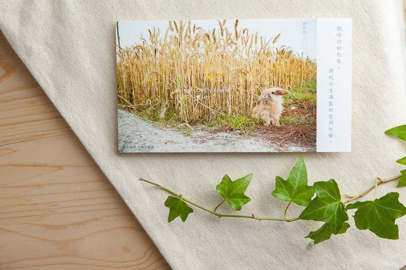 兔子攝影插畫明信片 - 豐收