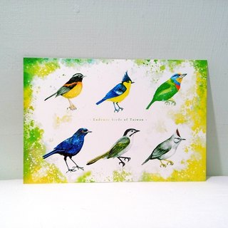 Taiwan unique bird / pictorial / double postcard postcard