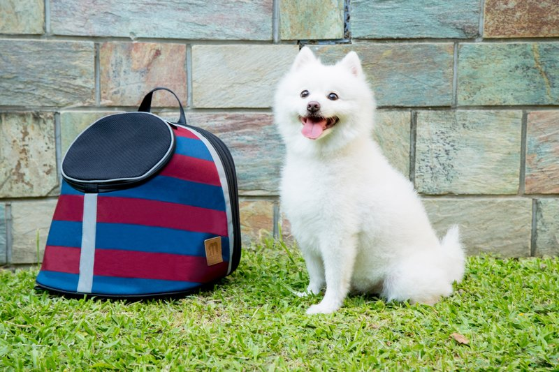 【MYZOO】 pet kangaroo bag