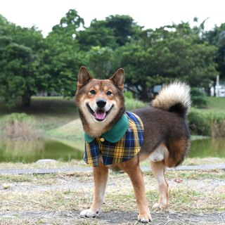 Handmade Tartan/Plaid Pet British Cape - Naughty Yellow-Dog/Cat/Rabbit【ZAZAZOO】
