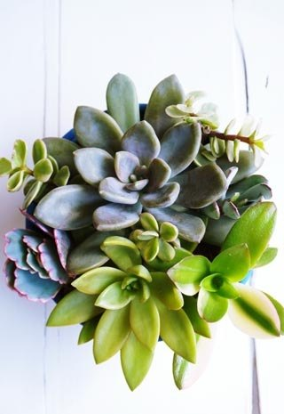 Succulents combination potted industrial wind retro design