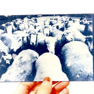 Cyanotype postcards cyanotype postcard (Chingjing sheep)