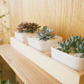 [Potted plants] beautiful scenery Best Scene three pieces of fleshy white porcelain square basin (including plant and wooden box) New home moving gifts graduation gift