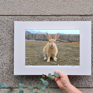 Limited rabbit photography art original - rabbit by the sea