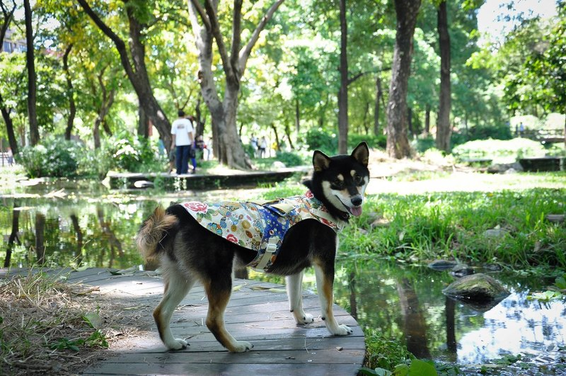 Among dog harness Japanese yukata