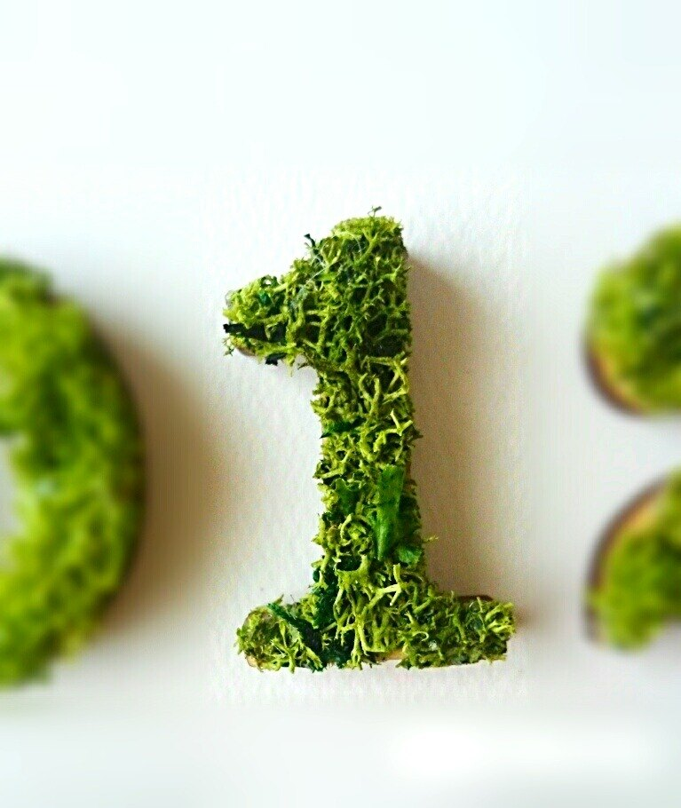 "Wooden numbers objects (Moss) 5cm ""1"" × 1 point"