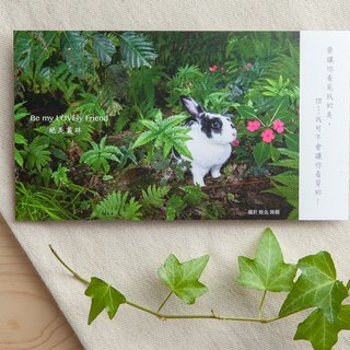 Bunny Photography Illustration Postcard - Awesome Jungle