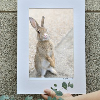 Limited rabbit photography art original - discussion