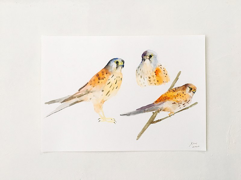 Original watercolor painting-Kestrel 19.2 x 27 cm