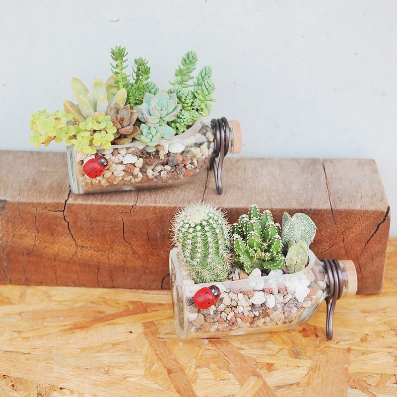 Doudou succulents and small groceries-drift bottle succulent planting combination