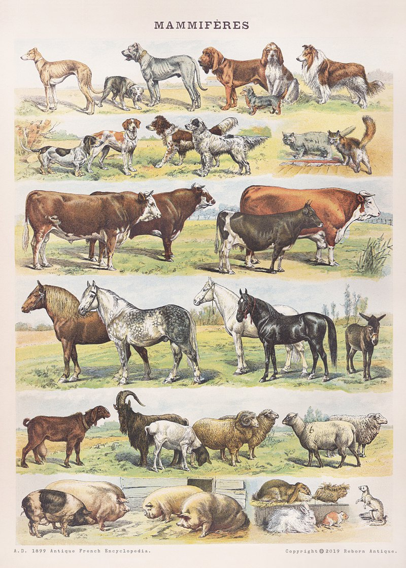The museum independently printed posters France 1860 antique encyclopedia illustration poster farm animals