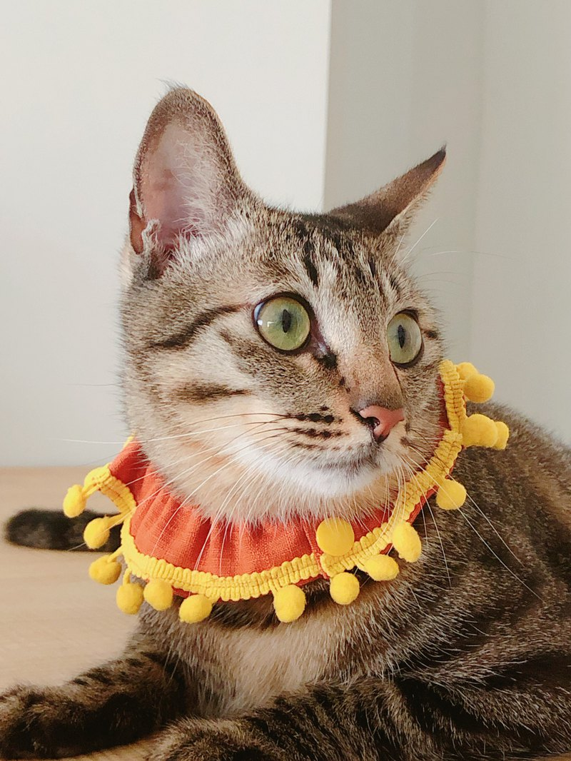 Meow little sun _ hand made cat collar _ color can be customized _ welcome to discuss