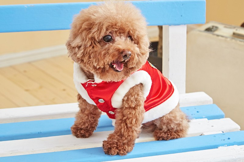 【Mao Duke】Chinese style red pet clothes