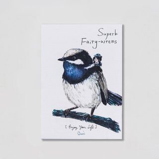 {BIRDER} Series -Superb Fairy-wrens