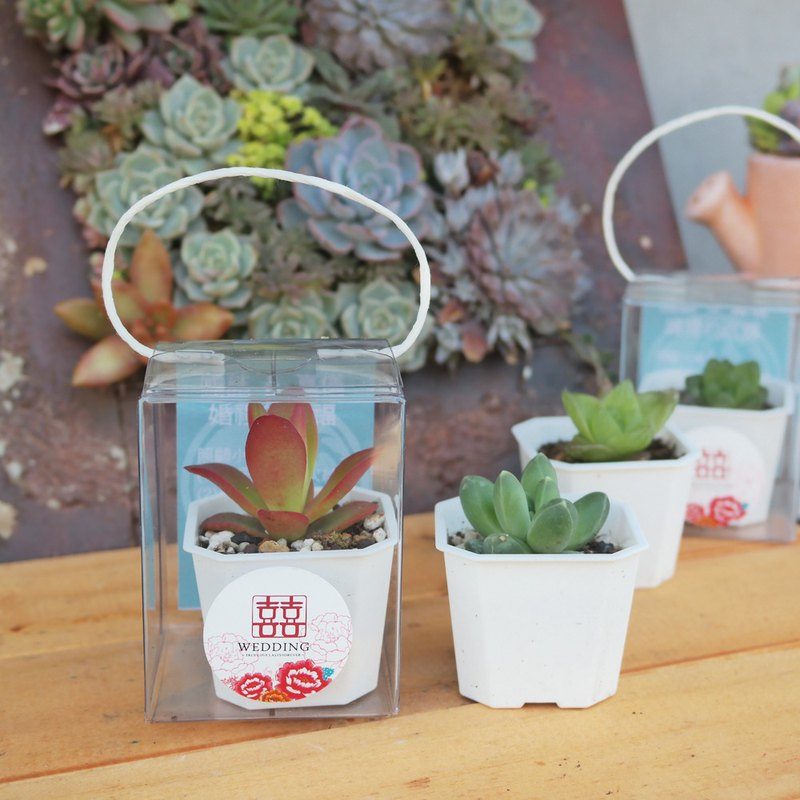 Peas succulents and small groceries - wedding small objects - 2 吋 portable box group - 50 pots for 1 group