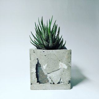 Cement window