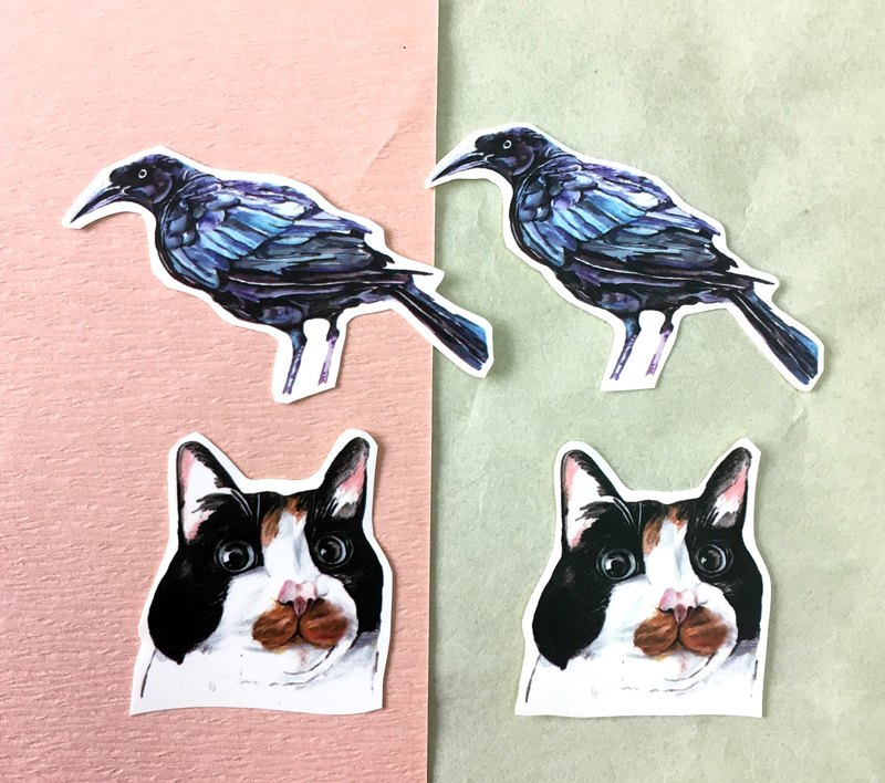 Birds and cats combination