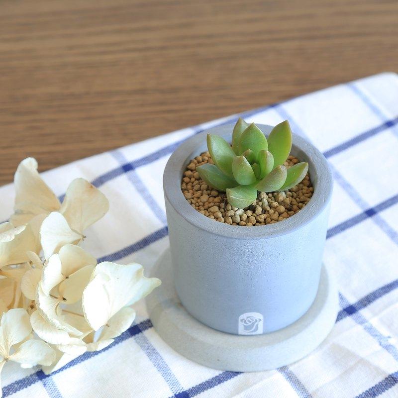 一口井 多肉植物仙人掌水泥手作盆栽組 含植物/黃麗