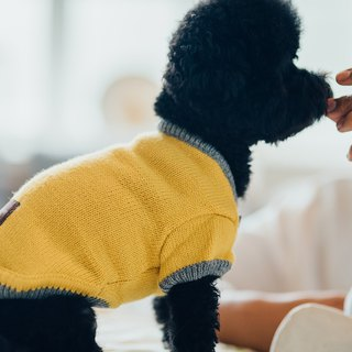 [Tail and me] pet clothes half open 襟 contrast color sweater yellow