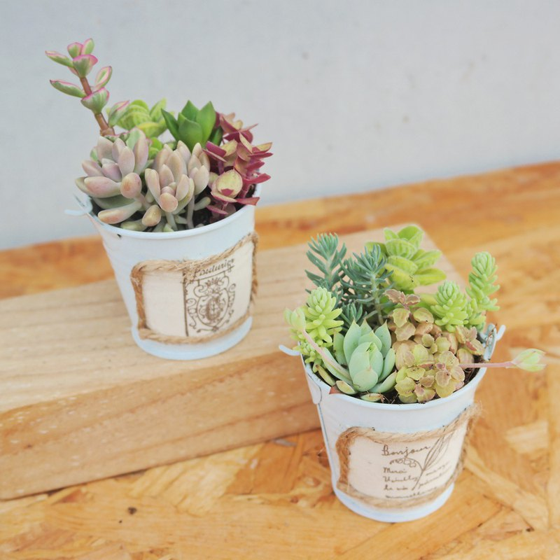 Peas succulents and small groceries - rustic style cute bucket planting combination