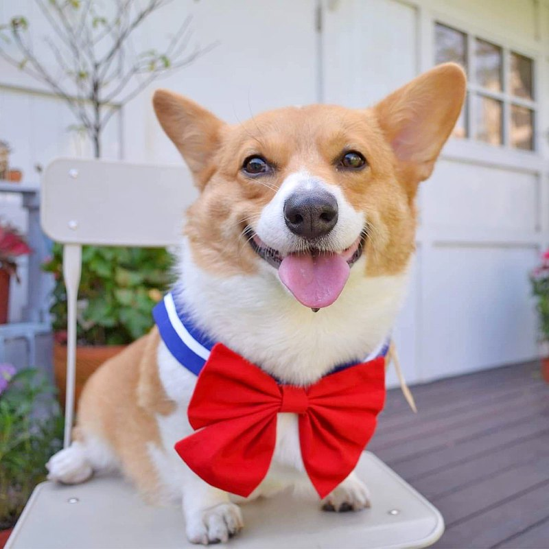 Sailor suit shape scarf pet