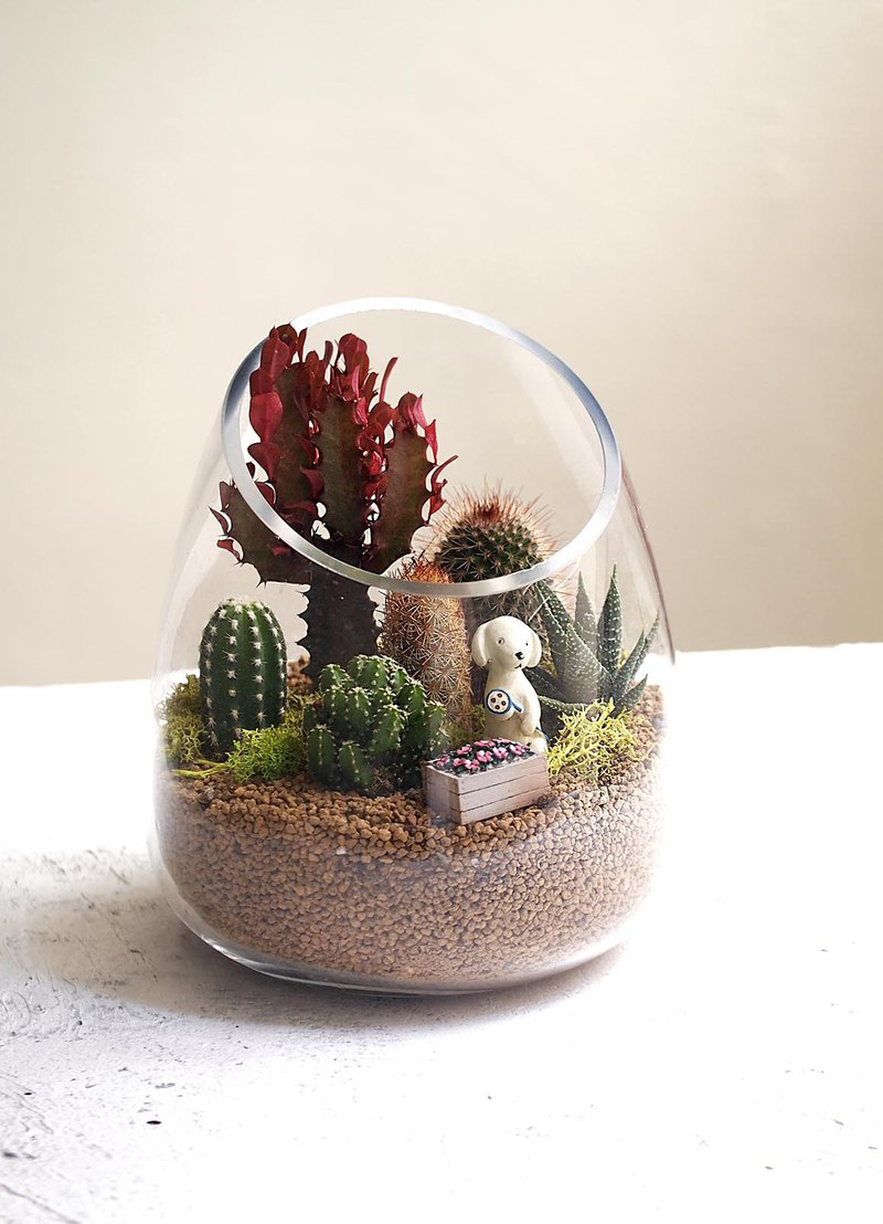 Cactus in the fleshy forest | Cactus group pot