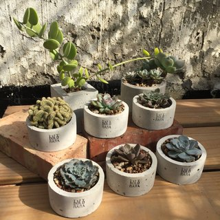 Round random plant Succulents cement potted plants exchange gifts